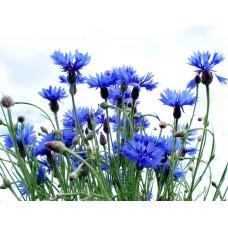 Гидролат Василька, натуральная цветочная вода - тоник для лица, 150 мл.